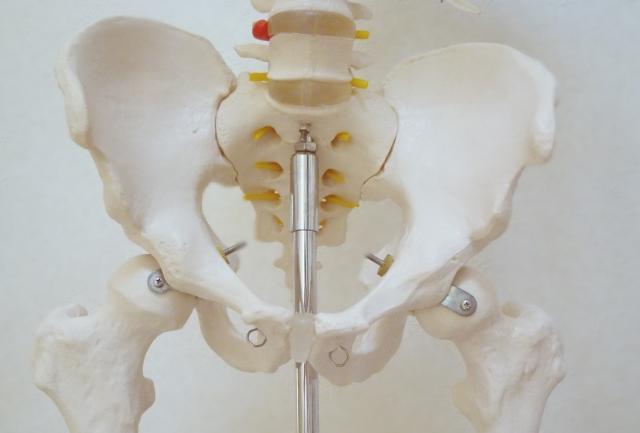 骨盤の歪みが身体のバランスに影響します